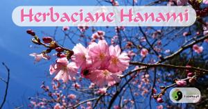 Herbaciane Hanami @ Aleja Sakur | Warszawa | mazowieckie | Polska